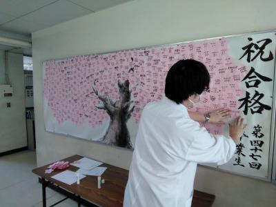 進路指導主事が桜を貼る(春)
